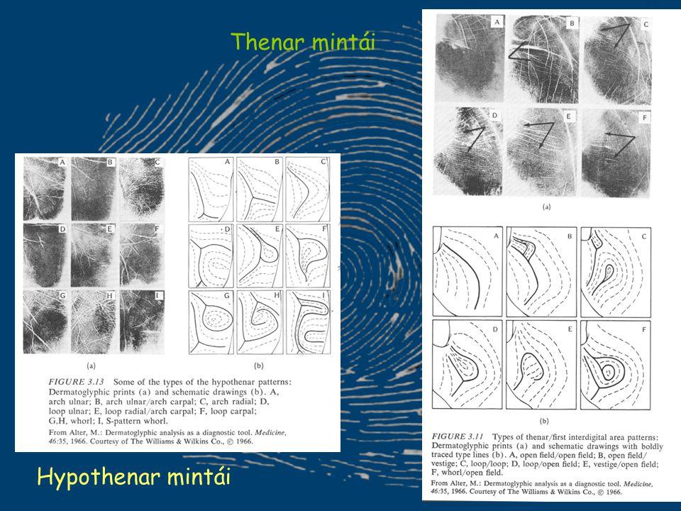 Hypothenar mintái Thenar mintái