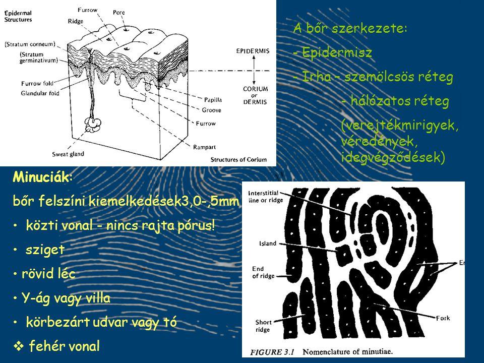 A bőr szerkezete: - Epidermisz - Irha – szemölcsös réteg - hálózatos réteg (verejtékmirigyek, véredények, idegvégződések) Minuciák: bőr felszíni kieme