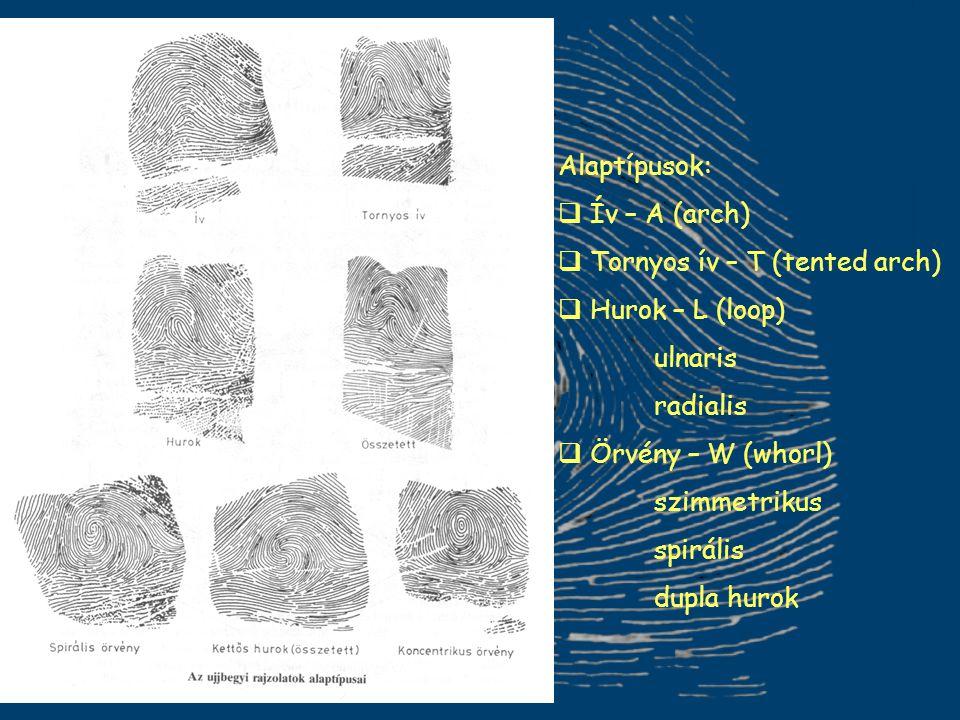 Alaptípusok:  Ív – A (arch)  Tornyos ív – T (tented arch)  Hurok – L (loop) ulnaris radialis  Örvény – W (whorl) szimmetrikus spirális dupla hurok