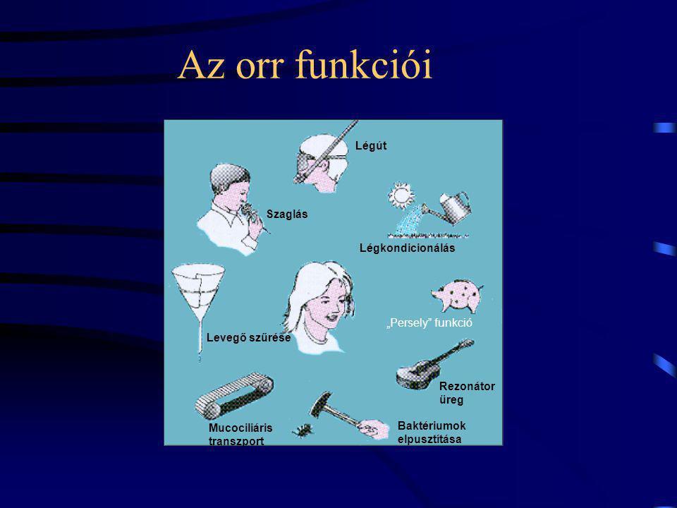 """Az orr funkciói Légút Szaglás Levegő szűrése Mucociliáris transzport Rezonátor üreg Baktériumok elpusztítása """"Persely funkció Légkondicionálás"""