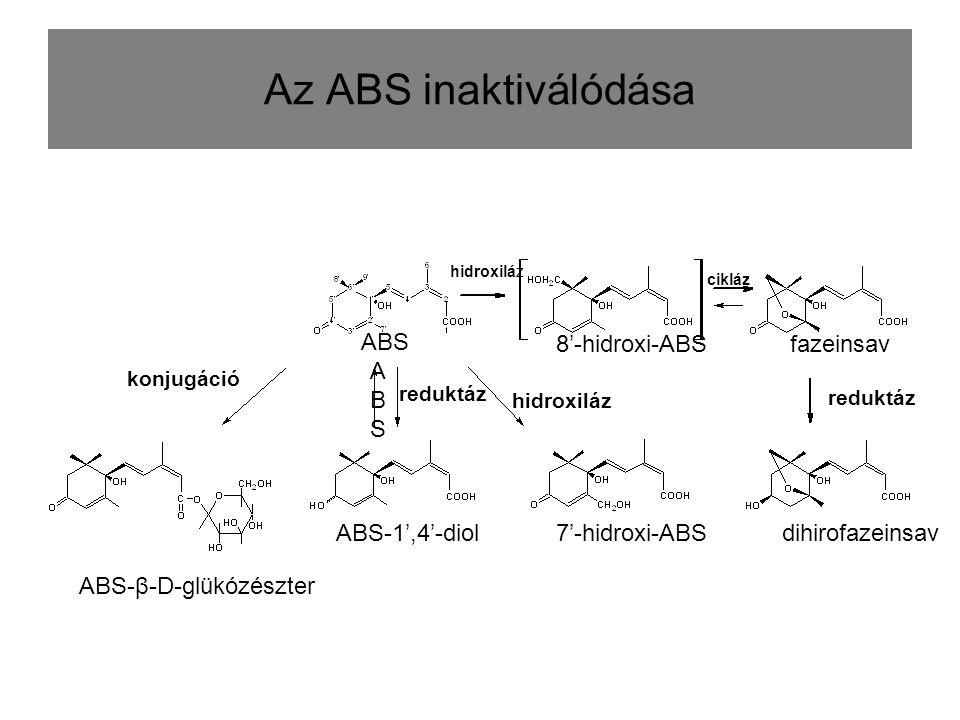 Az ABS inaktiválódása ABSABS konjugáció ABS-β-D-glükózészter ABS-1',4'-diol7'-hidroxi-ABSdihirofazeinsav fazeinsav reduktáz hidroxiláz ABS 8'-hidroxi-