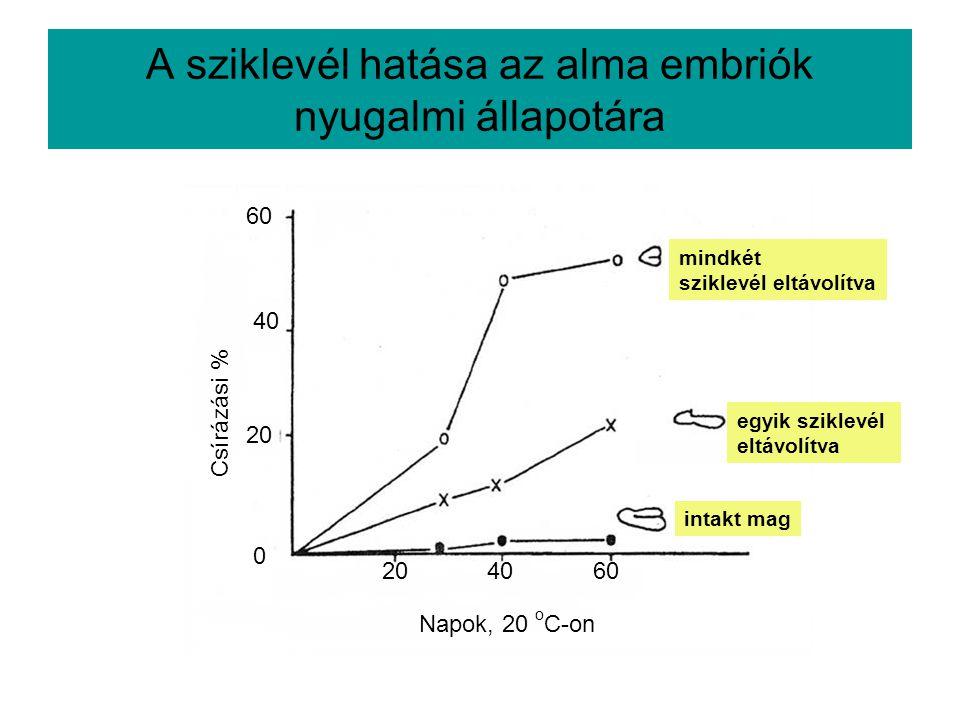 A sziklevél hatása az alma embriók nyugalmi állapotára Csírázási % 60 40 20 0 Napok, 20 o C-on 204060 mindkét sziklevél eltávolítva egyik sziklevél el