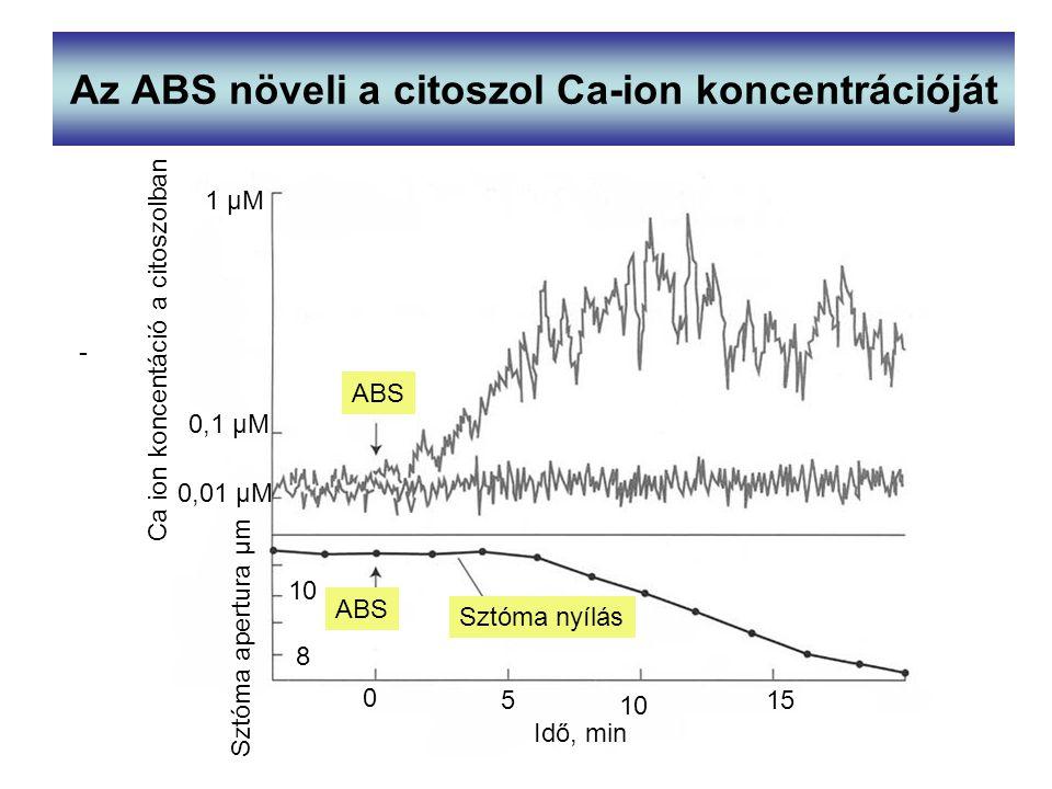 Az ABS növeli a citoszol Ca-ion koncentrációját ABS Sztóma nyílás Ca ion koncentáció a citoszolban Sztóma apertura µm - 1 µM 0,1 µM 0,01 µM 8 10 Idő,