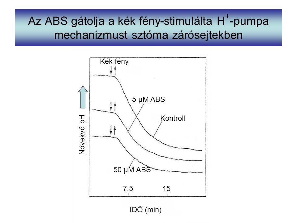 Az ABS gátolja a kék fény-stimulálta H + -pumpa mechanizmust sztóma zárósejtekben Kék fény Kontroll 5 µM ABS 50 µM ABS IDŐ (min) 7,515 Növekvő pH