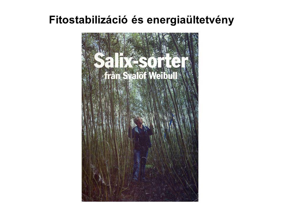 Fitostabilizáció és energiaültetvény