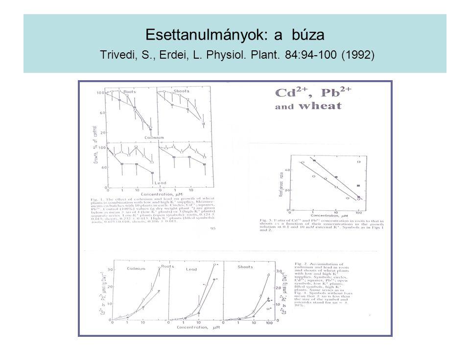 Esettanulmányok: a búza Trivedi, S., Erdei, L. Physiol. Plant. 84:94-100 (1992)