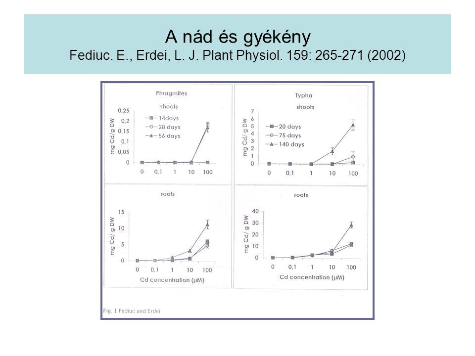A nád és gyékény Fediuc. E., Erdei, L. J. Plant Physiol. 159: 265-271 (2002)