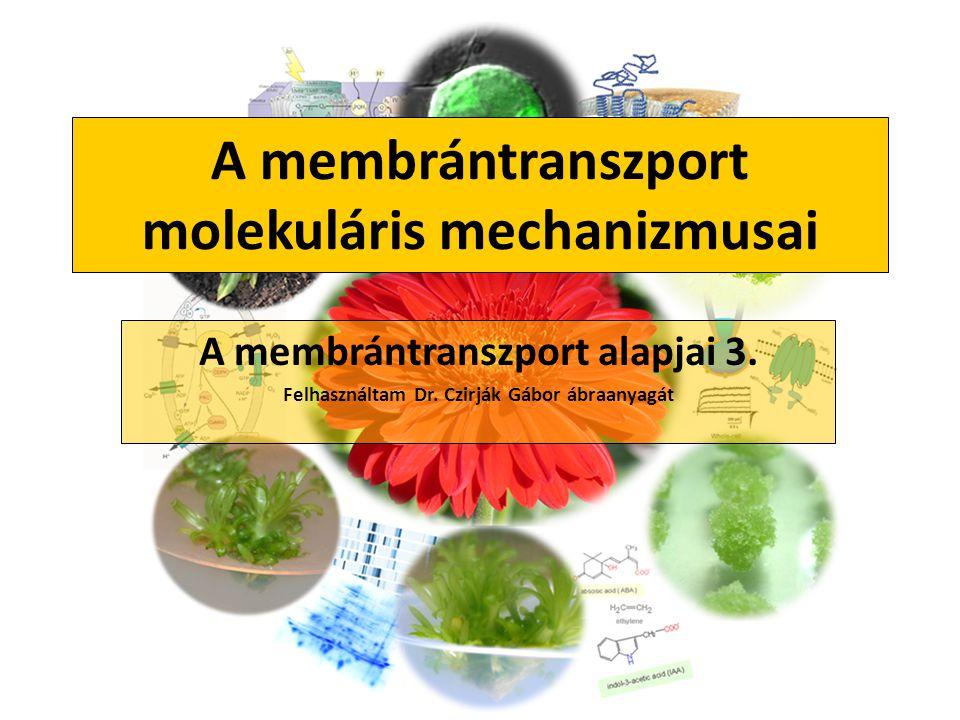 A membrántranszport molekuláris mechanizmusai A membrántranszport alapjai 3. Felhasználtam Dr. Czirják Gábor ábraanyagát