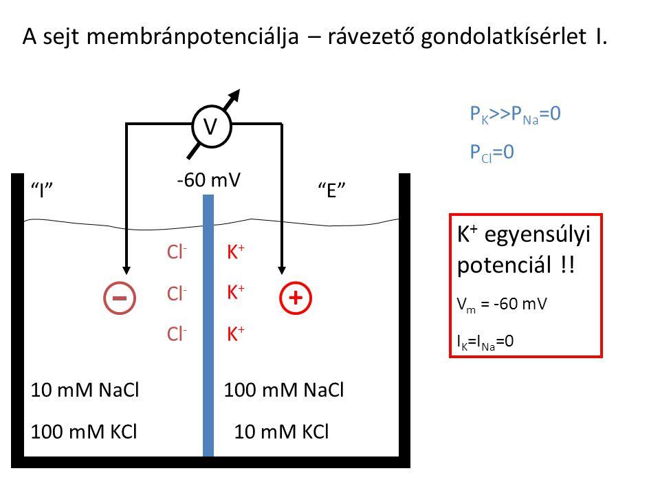 """A sejt membránpotenciálja – rávezető gondolatkísérlet I. 100 mM KCl10 mM KCl 10 mM NaCl100 mM NaCl """"I""""""""E""""""""E"""" P K >>P Na =0 P Cl =0 E m = ? + Cl - K+K+"""