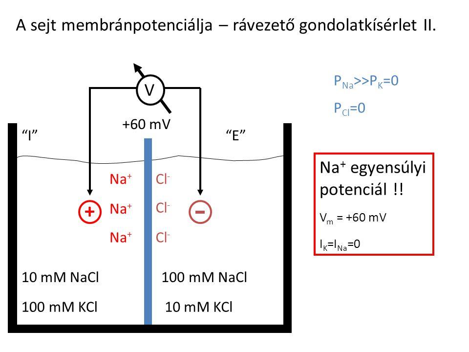 "A sejt membránpotenciálja – rávezető gondolatkísérlet II. 100 mM KCl10 mM KCl 10 mM NaCl100 mM NaCl ""I""""E""""E"" P Na >>P K =0 P Cl =0 E m = ? + Na + Cl"