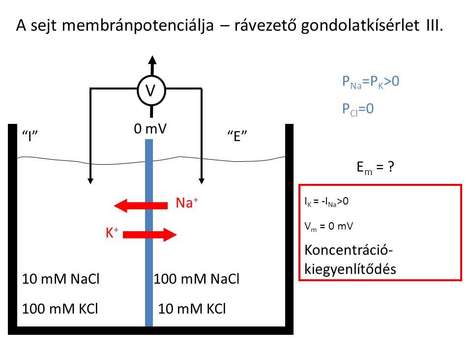 "A sejt membránpotenciálja – rávezető gondolatkísérlet III. 100 mM KCl10 mM KCl 10 mM NaCl100 mM NaCl ""I""""E""""E"" P Na =P K >0 P Cl =0 E m = ? I K = -I N"