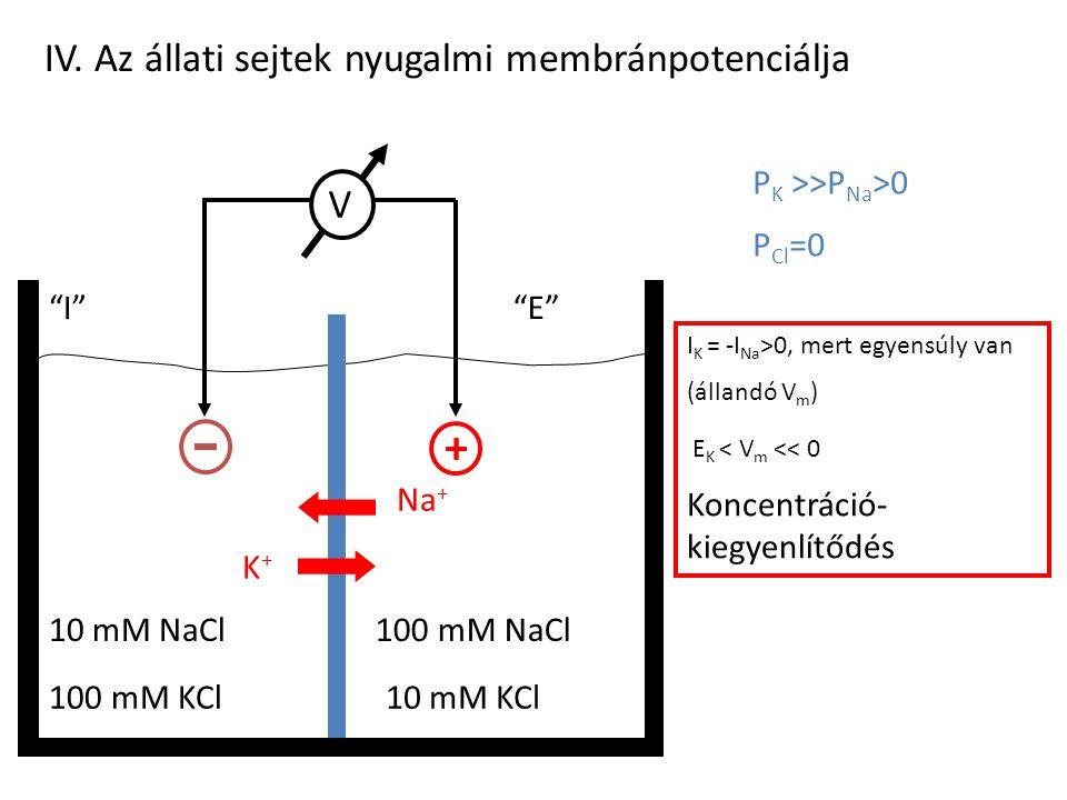 """IV. Az állati sejtek nyugalmi membránpotenciálja 100 mM KCl10 mM KCl 10 mM NaCl100 mM NaCl """"I""""""""E""""""""E"""" P K >>P Na >0 P Cl =0 V m hol van az E K, 0, E Na"""