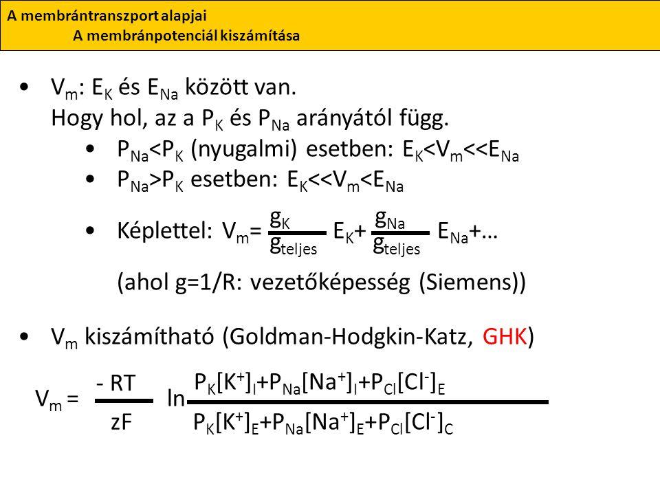 V m : E K és E Na között van. Hogy hol, az a P K és P Na arányától függ. P Na <P K (nyugalmi) esetben: E K <V m <<E Na P Na >P K esetben: E K <<V m <E