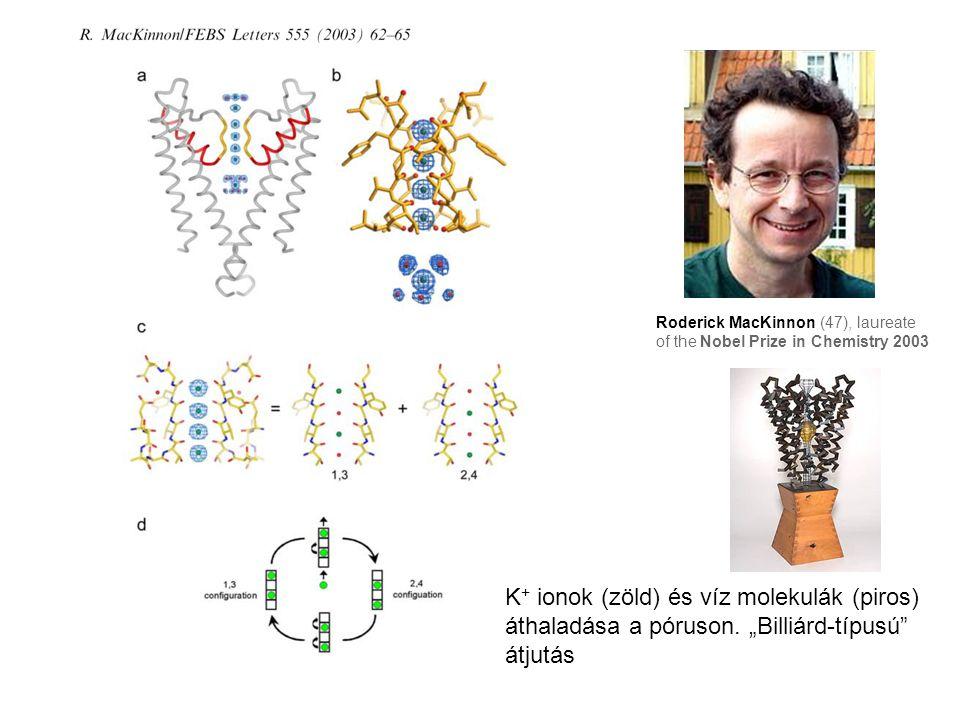 """K + ionok (zöld) és víz molekulák (piros) áthaladása a póruson. """"Billiárd-típusú"""" átjutás Roderick MacKinnon (47), laureate of the Nobel Prize in Chem"""