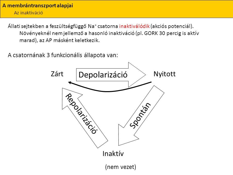 Állati sejtekben a feszültségfüggő Na + csatorna inaktiválódik (akciós potenciál). Növényeknél nem jellemző a hasonló inaktiváció (pl. GORK 30 percig