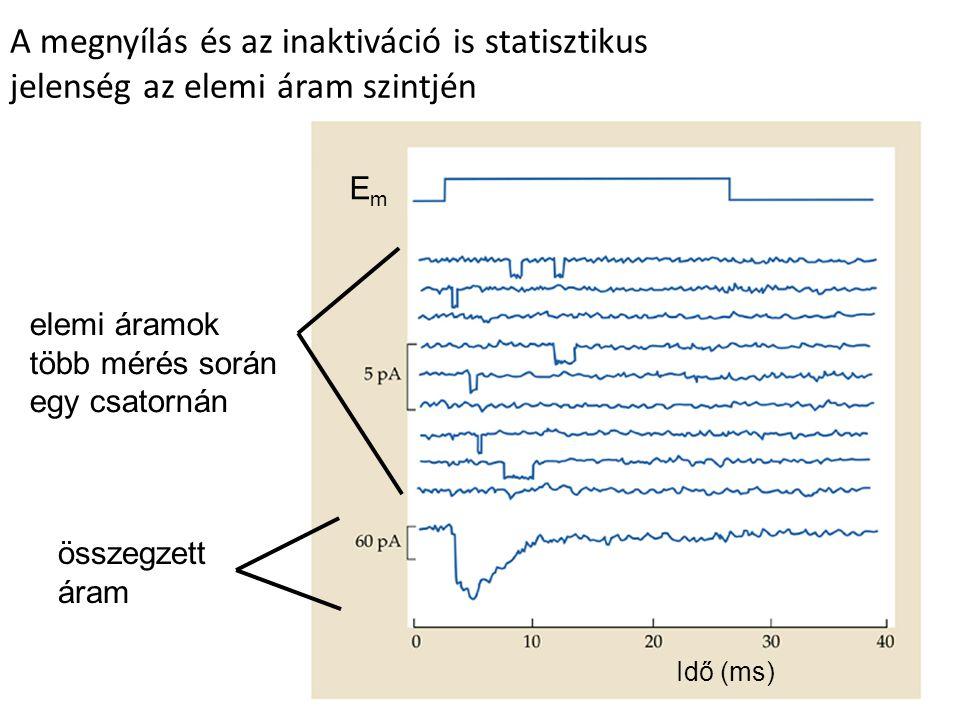 Idő (ms) A megnyílás és az inaktiváció is statisztikus jelenség az elemi áram szintjén EmEm elemi áramok több mérés során egy csatornán összegzett ára
