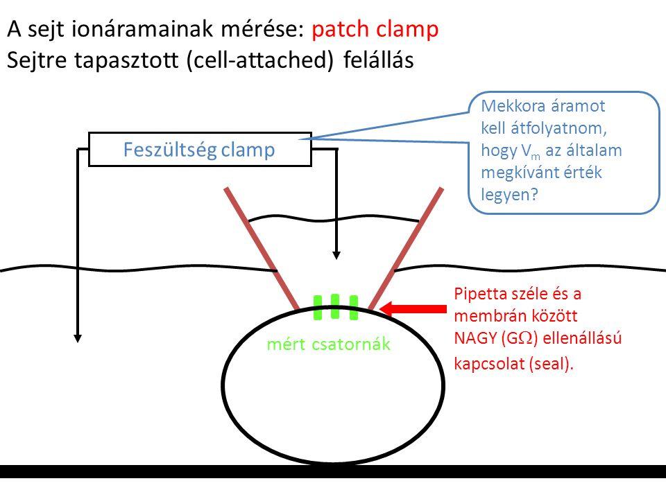 A sejt ionáramainak mérése: patch clamp Sejtre tapasztott (cell-attached) felállás Feszültség clamp Mekkora áramot kell átfolyatnom, hogy V m az által