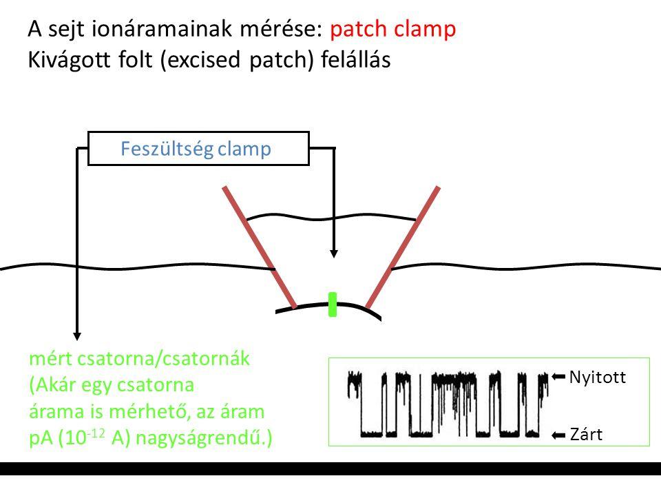 A sejt ionáramainak mérése: patch clamp Kivágott folt (excised patch) felállás Feszültség clamp mért csatorna/csatornák (Akár egy csatorna árama is mé