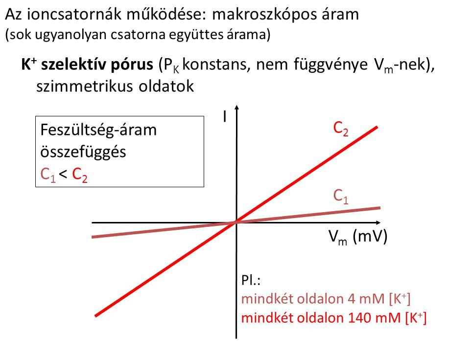 Az ioncsatornák működése: makroszkópos áram (sok ugyanolyan csatorna együttes árama) K + szelektív pórus (P K konstans, nem függvénye V m -nek), szimm