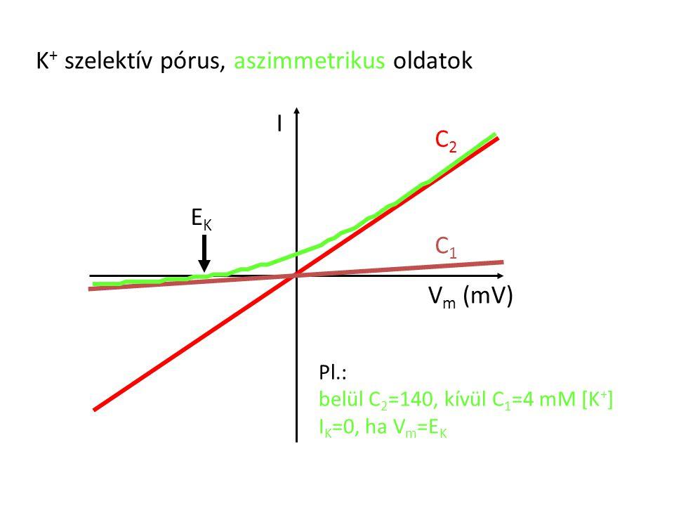 K + szelektív pórus, aszimmetrikus oldatok I V m (mV) C2C2 C1C1 Pl.: belül C 2 =140, kívül C 1 =4 mM [K + ] I K =0, ha V m =E K EKEK