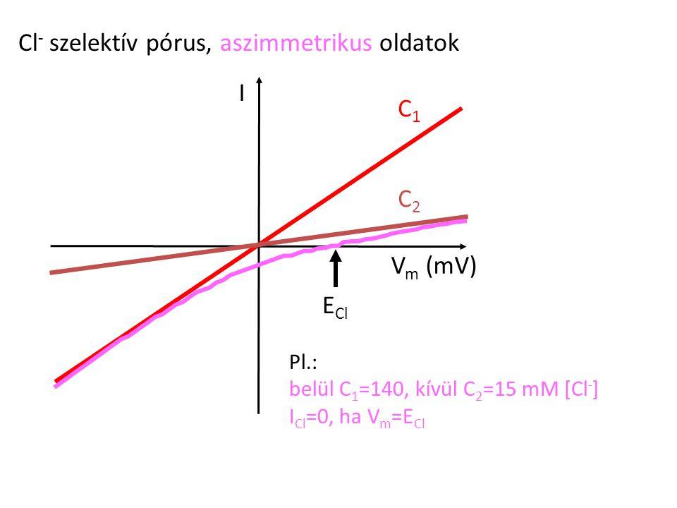 Cl - szelektív pórus, aszimmetrikus oldatok I V m (mV) C1C1 C2C2 Pl.: belül C 1 =140, kívül C 2 =15 mM [Cl - ] I Cl =0, ha V m =E Cl E Cl