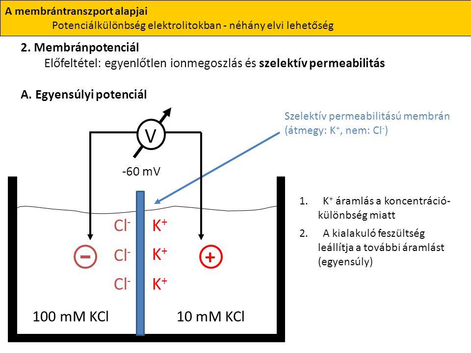 A membrántranszport alapjai Potenciálkülönbség elektrolitokban - néhány elvi lehetőség 2. Membránpotenciál Előfeltétel: egyenlőtlen ionmegoszlás és sz