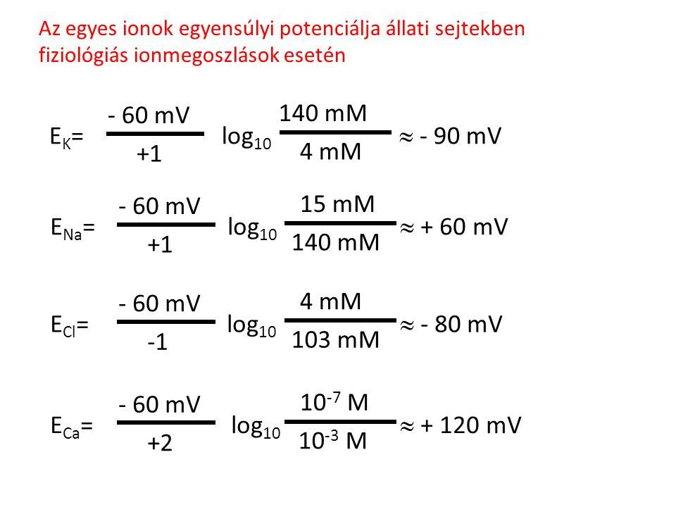 Az egyes ionok egyensúlyi potenciálja állati sejtekben fiziológiás ionmegoszlások esetén E K = log 10  - 90 mV 140 mM 4 mM - 60 mV +1 E Na = log 10 