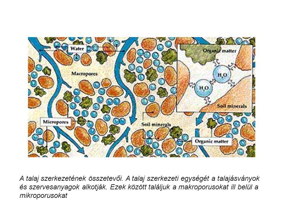 A talaj szerkezetének összetevői. A talaj szerkezeti egységét a talajásványok és szervesanyagok alkotják. Ezek között találjuk a makroporusokat ill be