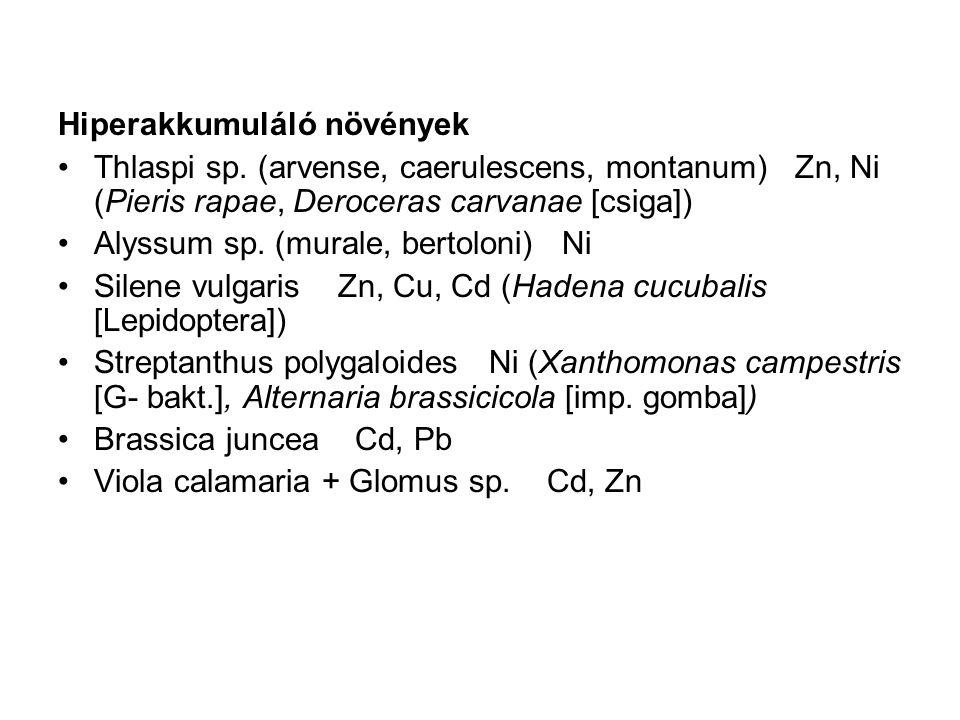 Hiperakkumuláló növények Thlaspi sp. (arvense, caerulescens, montanum) Zn, Ni (Pieris rapae, Deroceras carvanae [csiga]) Alyssum sp. (murale, bertolon