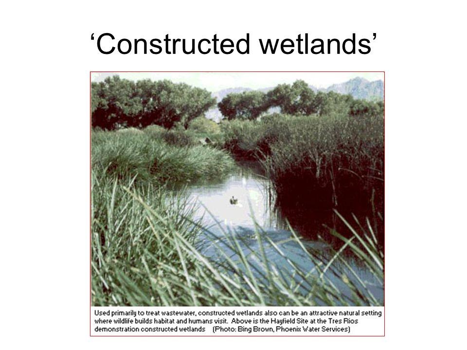 'Constructed wetlands'