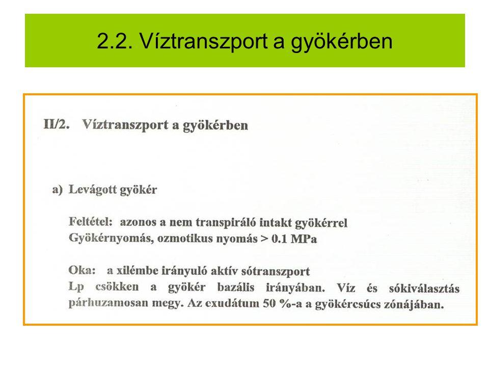 2.2. Víztranszport a gyökérben