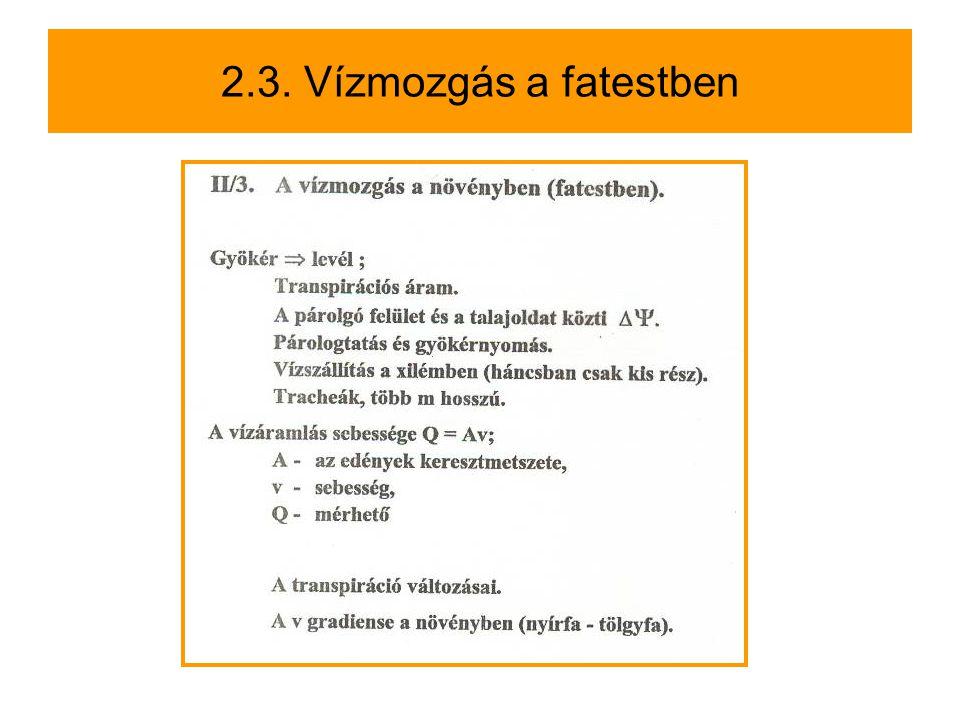 2.3. Vízmozgás a fatestben