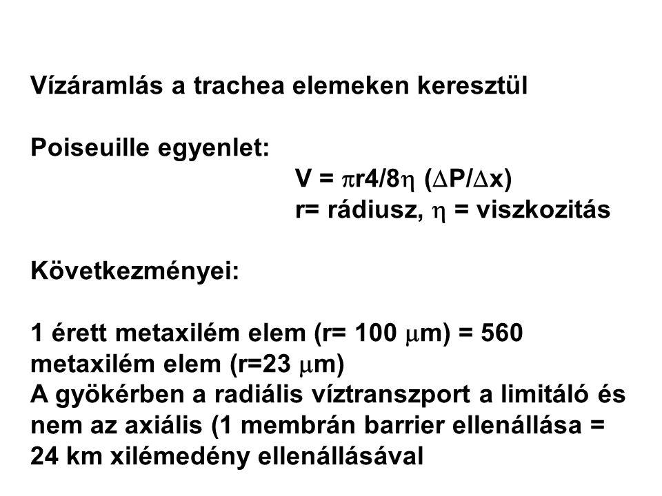 Vízáramlás a trachea elemeken keresztül Poiseuille egyenlet: V =  r4/8  (  P/  x) r= rádiusz,  = viszkozitás Következményei: 1 érett metaxilém elem (r= 100  m) = 560 metaxilém elem (r=23  m) A gyökérben a radiális víztranszport a limitáló és nem az axiális (1 membrán barrier ellenállása = 24 km xilémedény ellenállásával Vízáramlás a trachea elemeken keresztül Poiseuille egyenlet: V =  r4/8  (  P/  x) r= rádiusz,  = viszkozitás Következményei: 1 érett metaxilém elem (r= 100  m) = 560 metaxilém elem (r=23  m) A gyökérben a radiális víztranszport a limitáló és nem az axiális (1 membrán barrier ellenállása = 24 km xilémedény ellenállásával