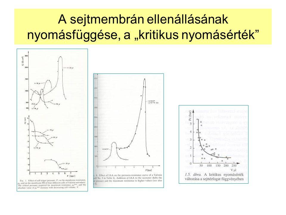 """A sejtmembrán ellenállásának nyomásfüggése, a """"kritikus nyomásérték"""