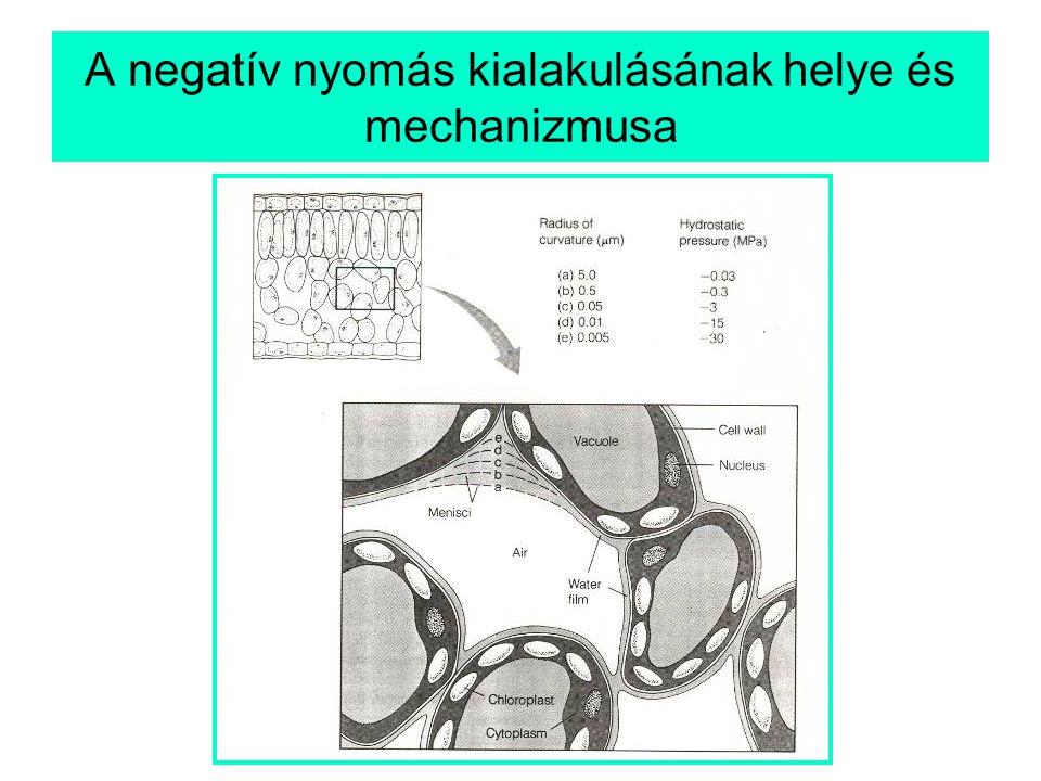 A negatív nyomás kialakulásának helye és mechanizmusa