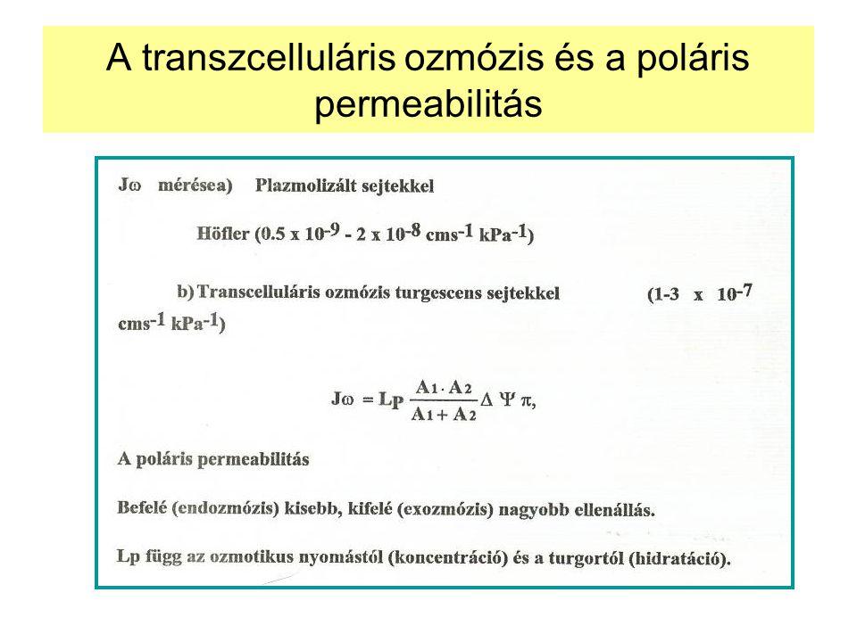 A transzcelluláris ozmózis és a poláris permeabilitás