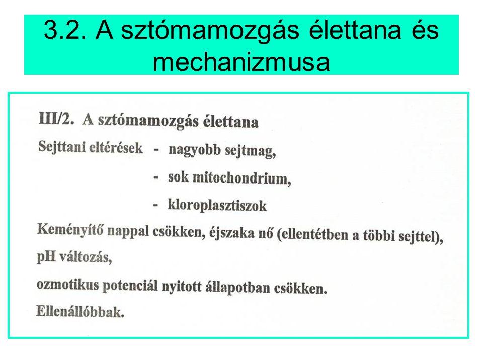 3.2. A sztómamozgás élettana és mechanizmusa