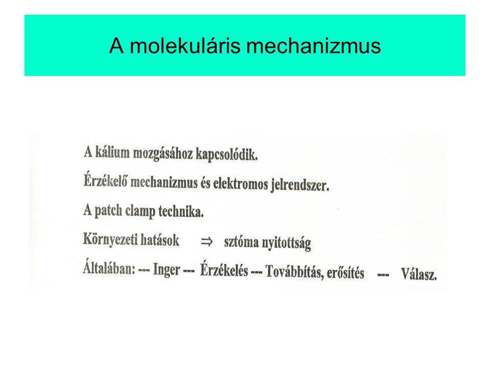A molekuláris mechanizmus