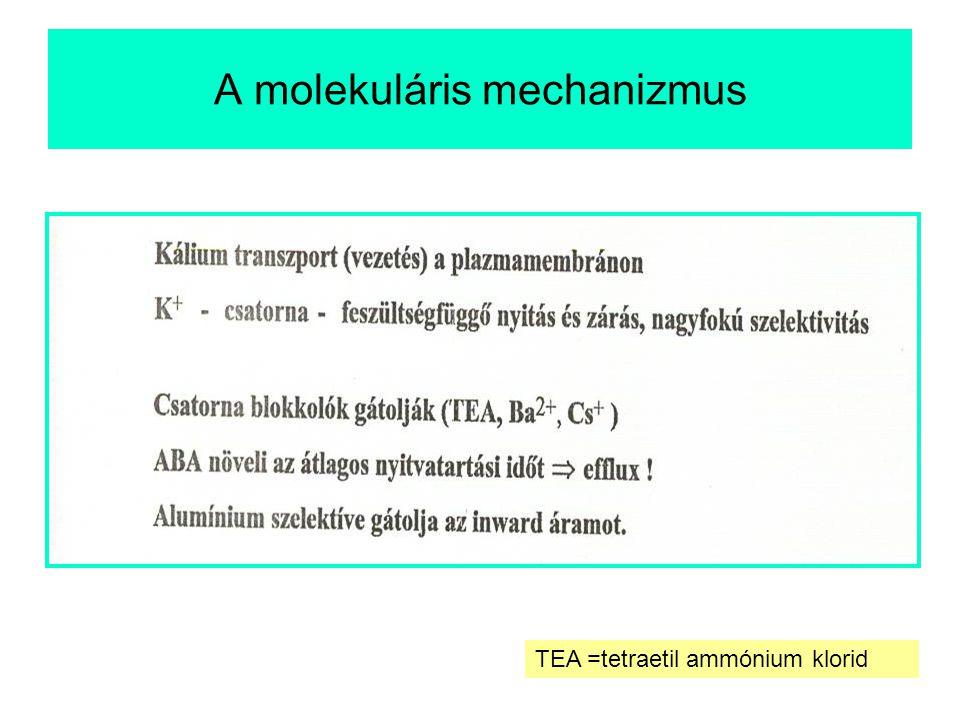 A molekuláris mechanizmus TEA =tetraetil ammónium klorid