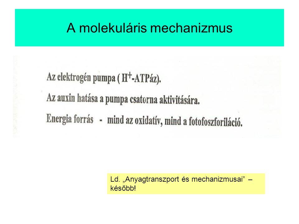 """A molekuláris mechanizmus Ld. """"Anyagtranszport és mechanizmusai – később!"""