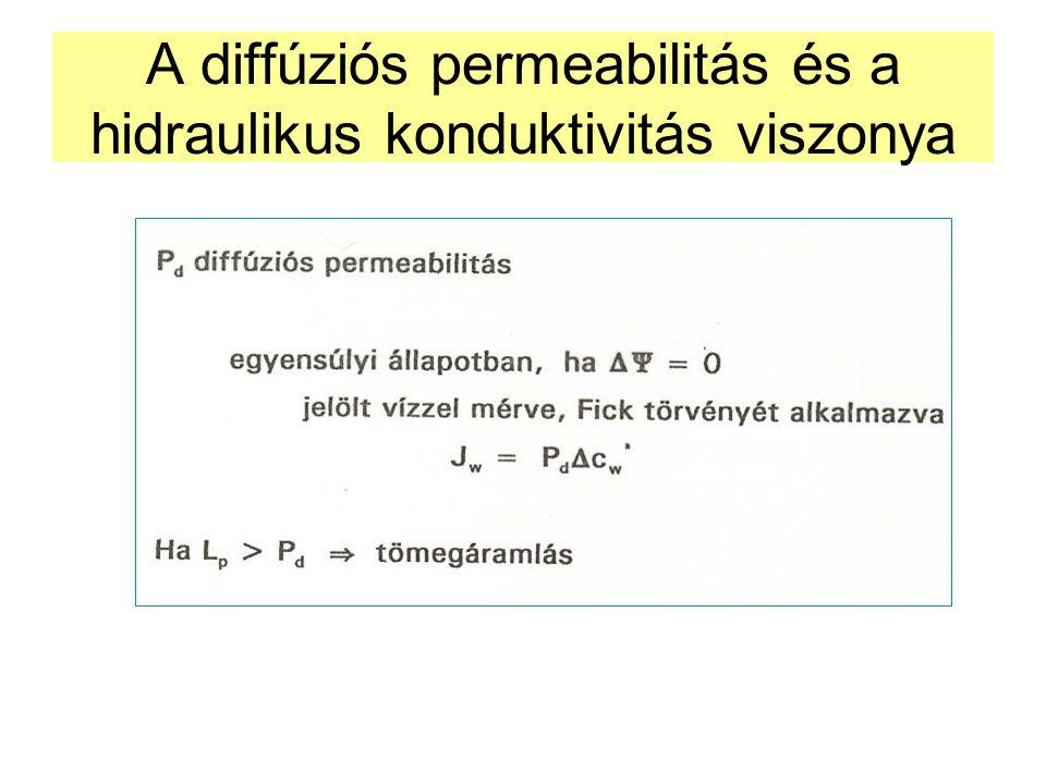 A diffúziós permeabilitás és a hidraulikus konduktivitás viszonya