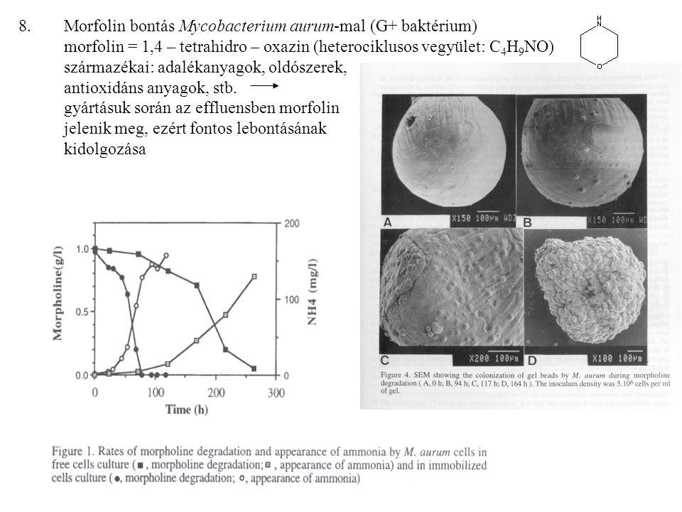8.Morfolin bontás Mycobacterium aurum-mal (G+ baktérium) morfolin = 1,4 – tetrahidro – oxazin (heterociklusos vegyület: C 4 H 9 NO) származékai: adalékanyagok, oldószerek, antioxidáns anyagok, stb.