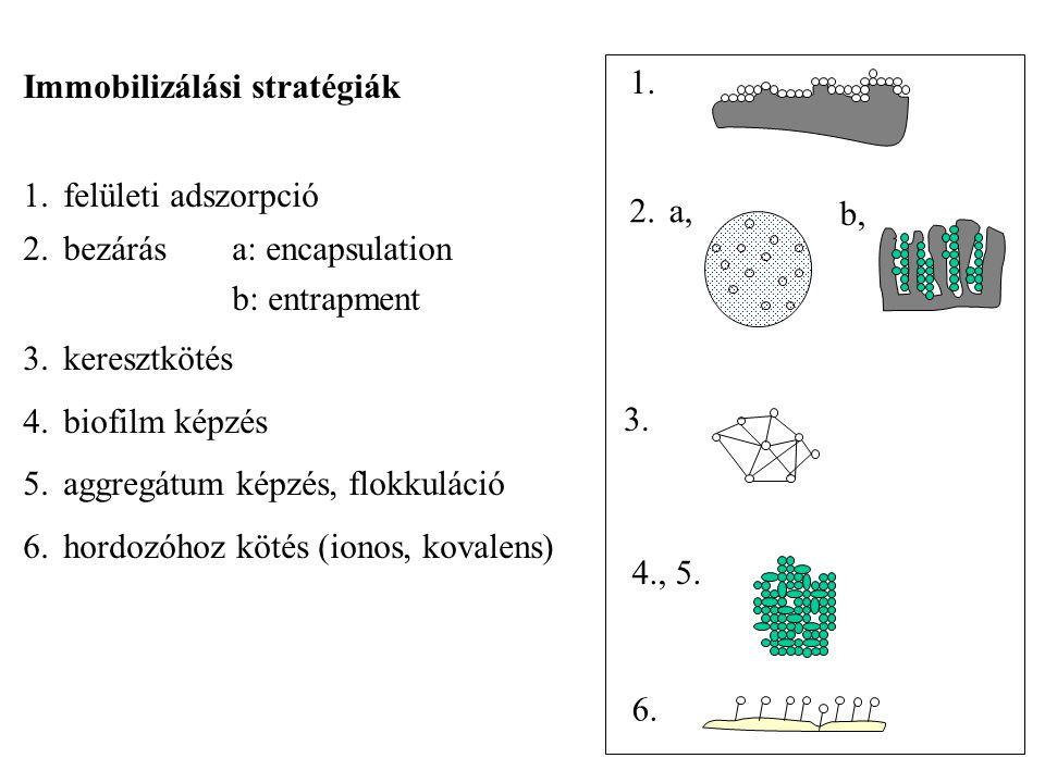 Immobilizálási stratégiák 1.felületi adszorpció 2.bezárás a: encapsulation b: entrapment 3.keresztkötés 4.biofilm képzés 5.aggregátum képzés, flokkuláció 6.hordozóhoz kötés (ionos, kovalens) 1.