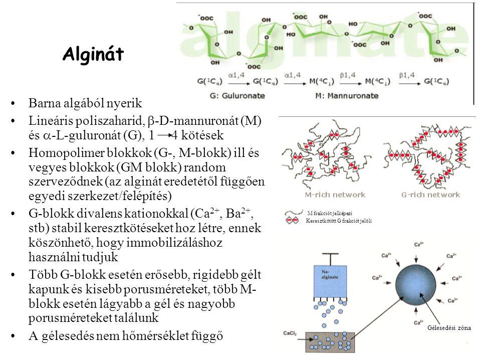 Alginát Barna algából nyerik Lineáris poliszaharid,  -D-mannuronát (M) és  -L-guluronát (G), 1 4 kötések Homopolimer blokkok (G-, M-blokk) ill és ve