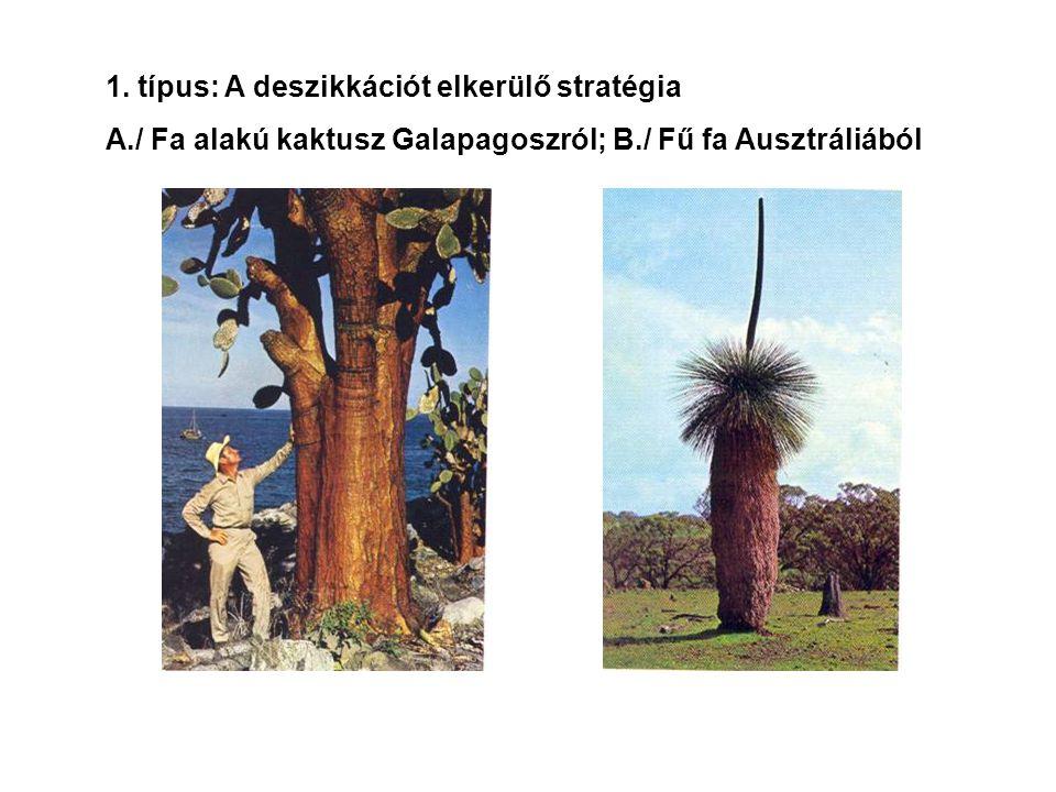 1. típus: A deszikkációt elkerülő stratégia A./ Fa alakú kaktusz Galapagoszról; B./ Fű fa Ausztráliából