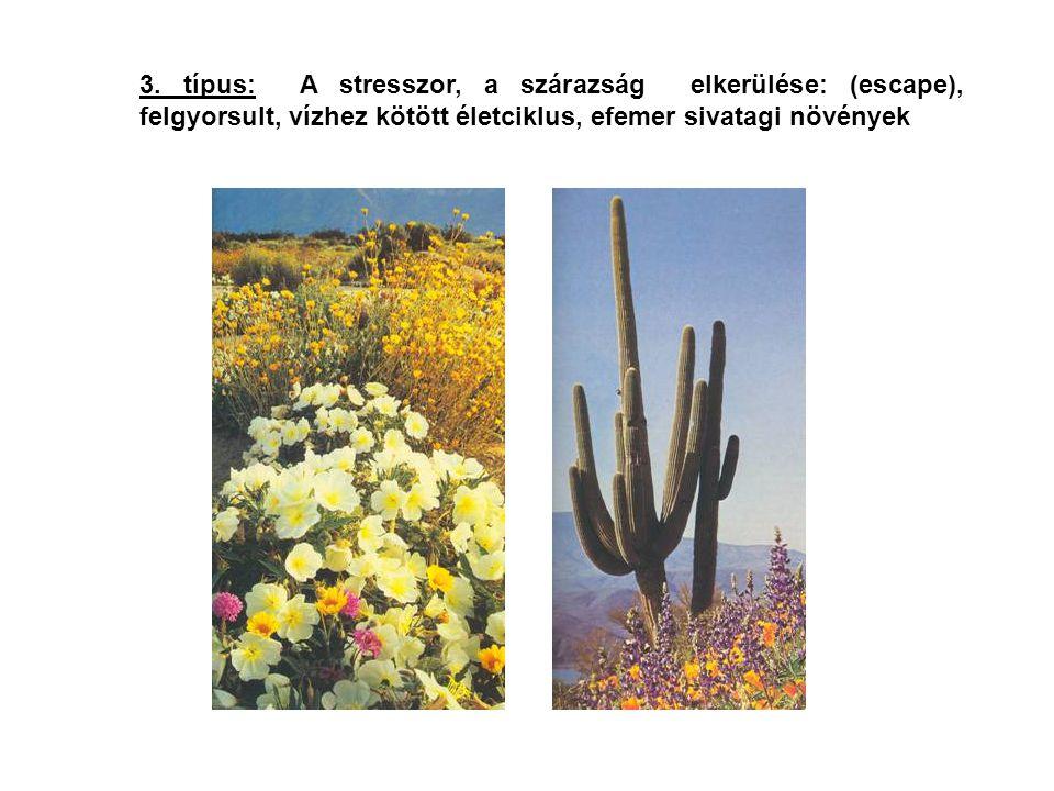 3. típus: A stresszor, a szárazság elkerülése: (escape), felgyorsult, vízhez kötött életciklus, efemer sivatagi növények