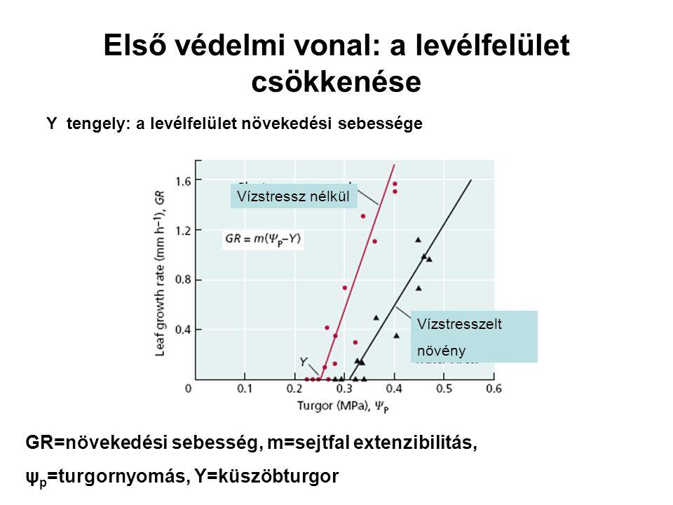 Első védelmi vonal: a levélfelület csökkenése Y tengely: a levélfelület növekedési sebessége Vízstressz nélkül Vízstresszelt növény GR=növekedési sebe