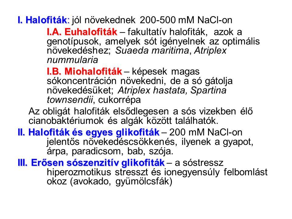 I. Halofiták: I. Halofiták: jól növekednek 200-500 mM NaCl-on I.A. Euhalofiták I.A. Euhalofiták – fakultatív halofiták, azok a genotípusok, amelyek só