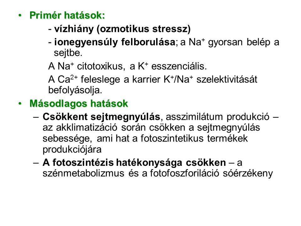 Primér hatások:Primér hatások: - vízhiány (ozmotikus stressz) - ionegyensúly felborulása; a Na + gyorsan belép a sejtbe. A Na + citotoxikus, a K + ess