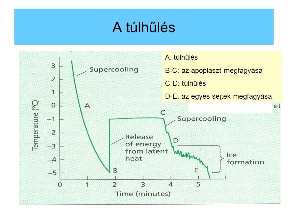 A túlhűlés A: túlhűlés B-C: az apoplaszt megfagyása C-D: túlhűlés D-E: az egyes sejtek megfagyása
